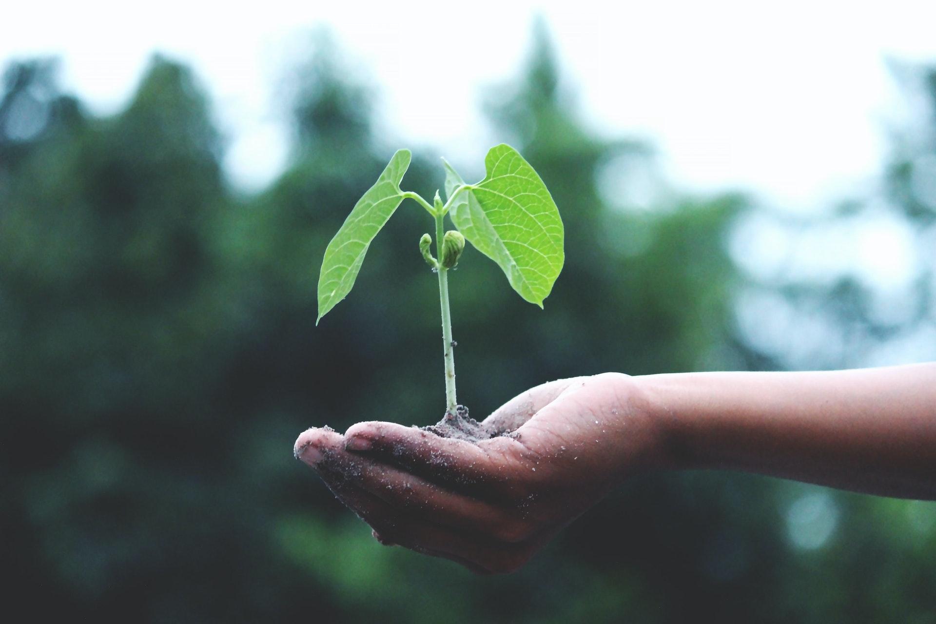 5 apps et sites pour planter des arbres de chez soi